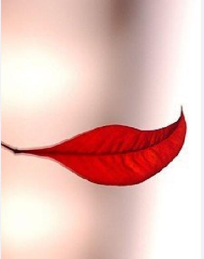 相思树叶似红唇,一片冰心枉对人.