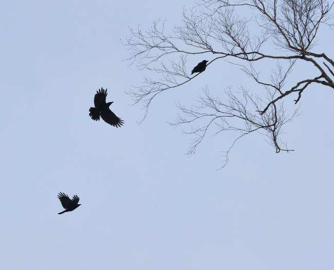枝上啼寒鸦,喈喈诉天涯.老树嶙峋瘦,高枝安小家.