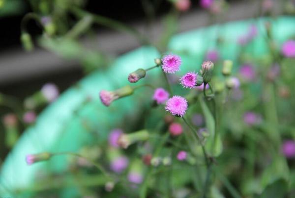 带有植物名字的诗句