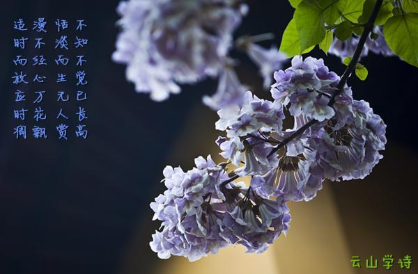 桐木花 - 52shici.com