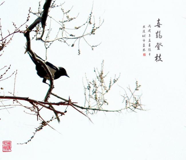 鹊鸟登枝公孙树(银杏树)