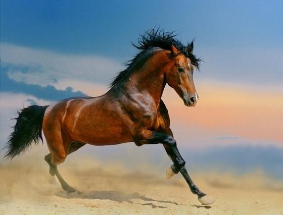 壁纸 动物 马 骑马 560_426