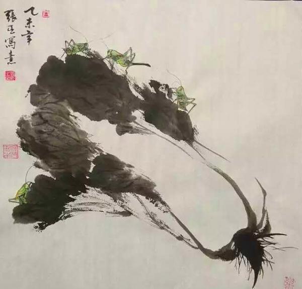 白菜根茎叶结构图