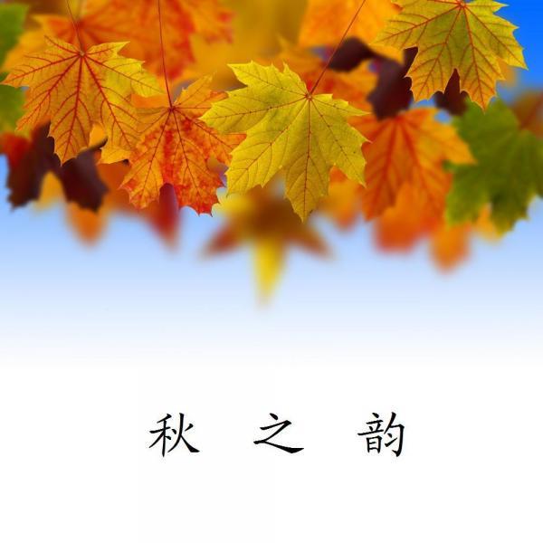 落叶飘飞霜满地