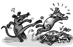 猫鼠恩仇记 - 杏林愚翁 - 杏林愚翁