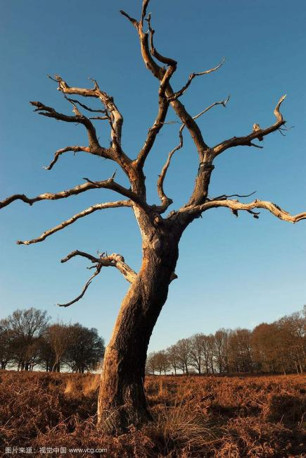 冬之落叶树图片