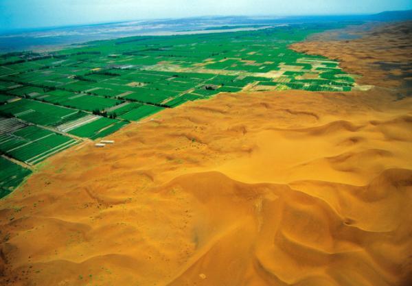 广泛分布于新疆塔里木盆地